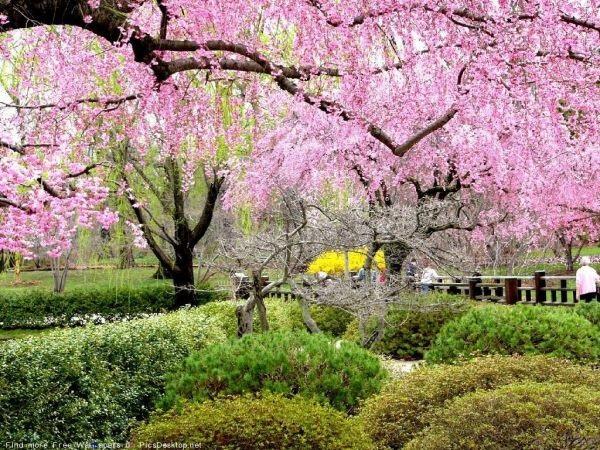 Весна Красивые фотографии (17)