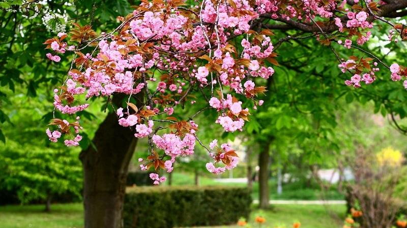 Весна Красивые фотографии (18)