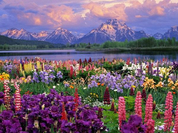 Весна Красивые фотографии (19)