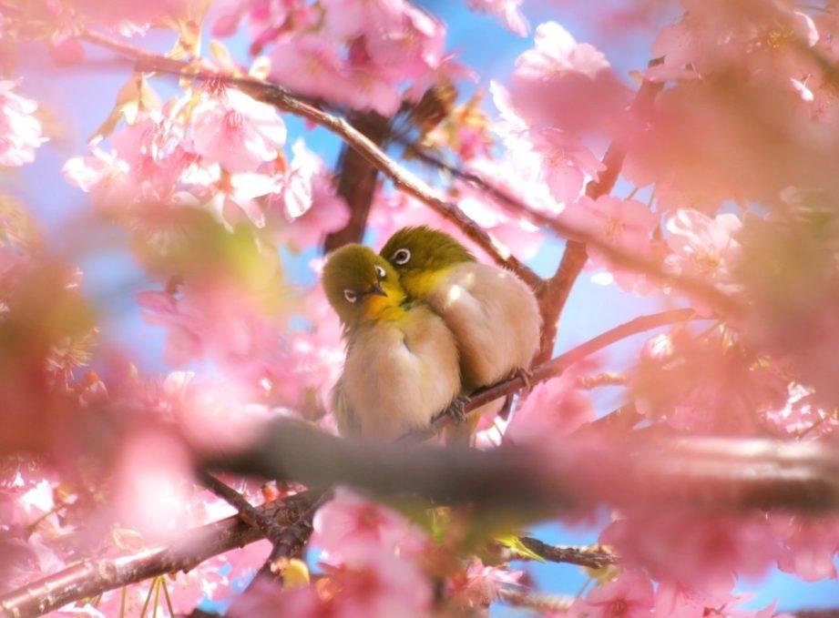 Весна Красивые фотографии (2)