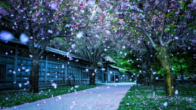 Весна Красивые фотографии (23)