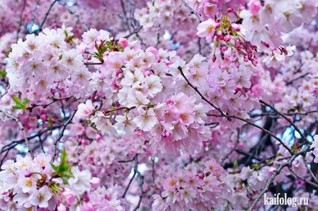 Весна Красивые фотографии (24)