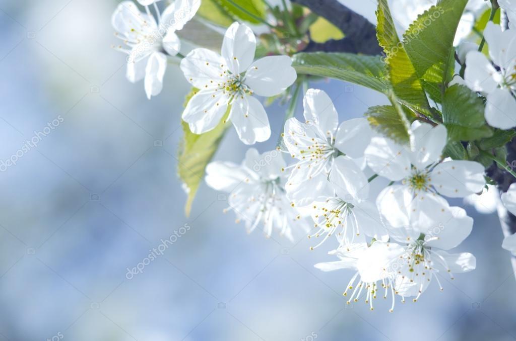 Весна Красивые фотографии (3)
