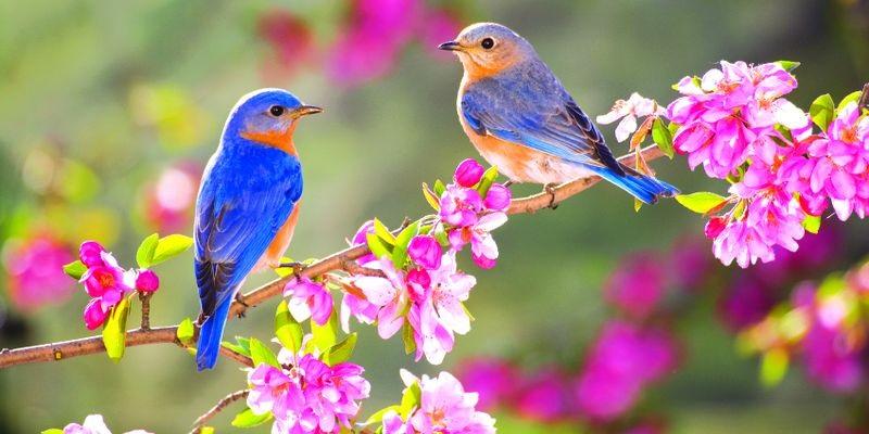 Весна Красивые фотографии (5)
