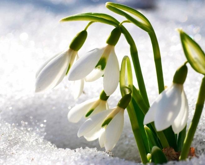 Весна Красивые фотографии (6)