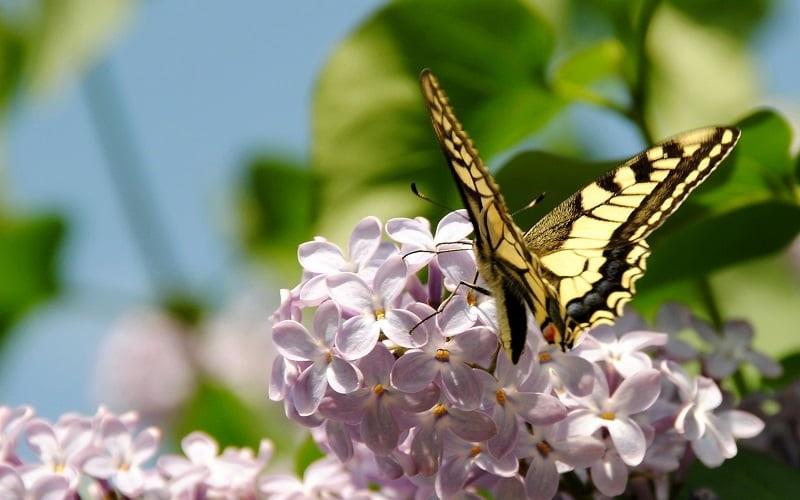 Весна Красивые фотографии (7)