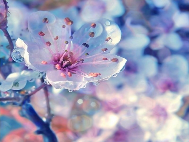 Весна Красивые фотографии (8)