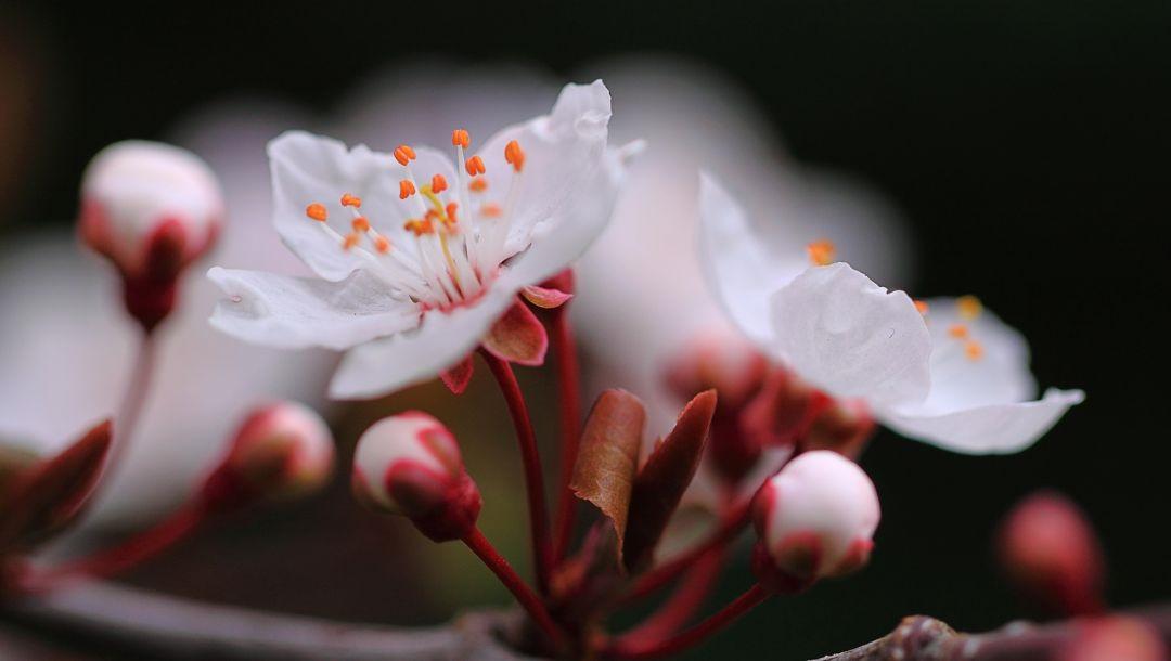 Весна Красивые фотографии (9)