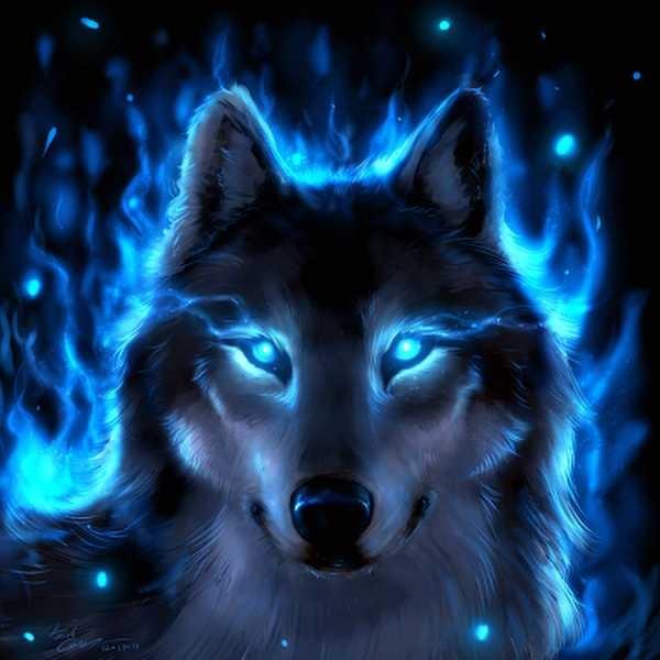 Волк красивые картинки (15)