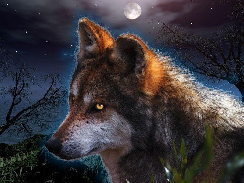 Волк красивые картинки (2)
