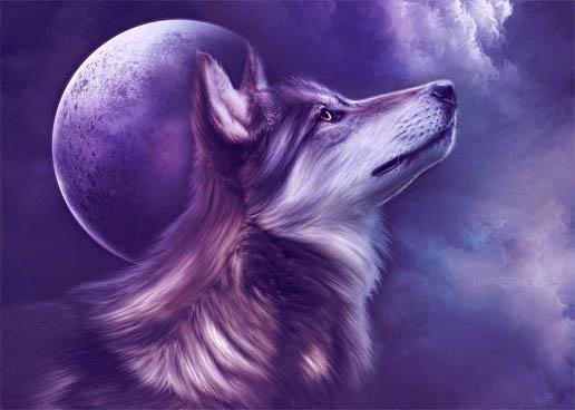 Волк красивые картинки (20)
