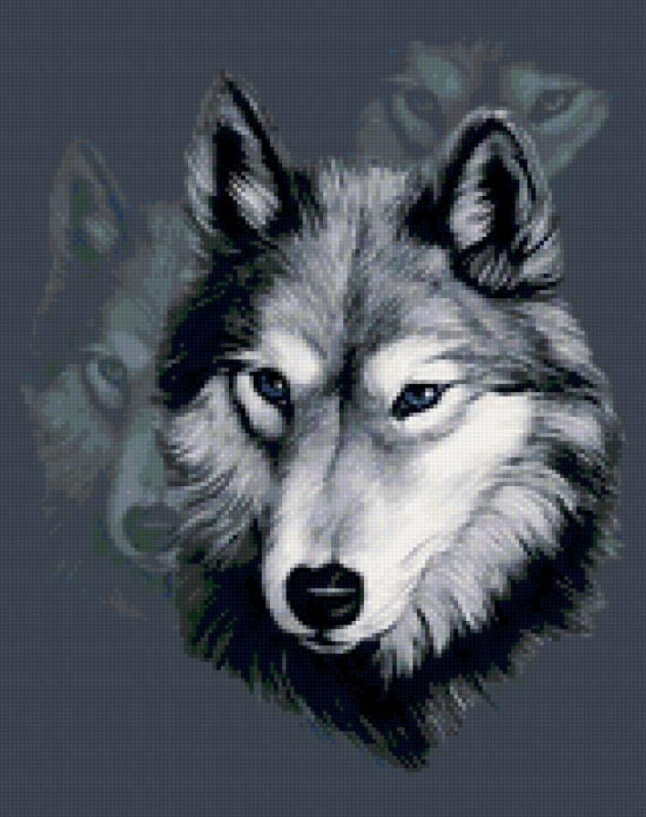 Волк красивые картинки (25)