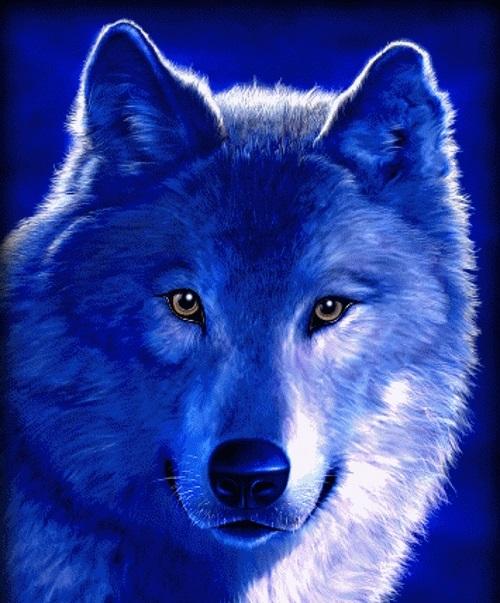 Волк красивые картинки (4)