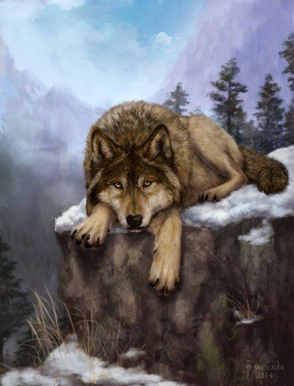 Волк красивые картинки (5)
