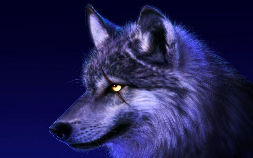 Волк красивые картинки (8)