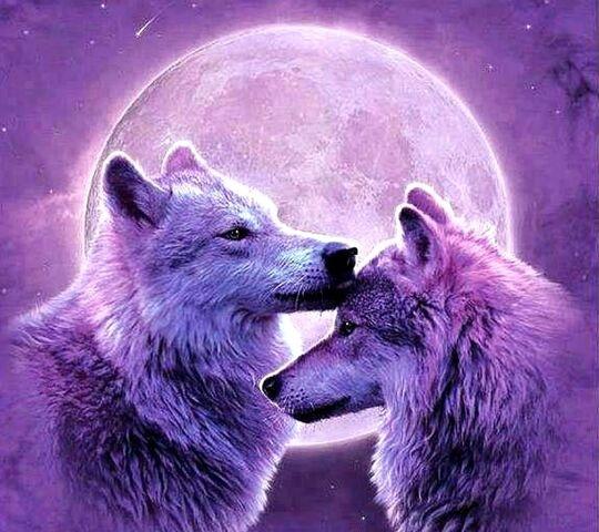 Волк красивые картинки (9)