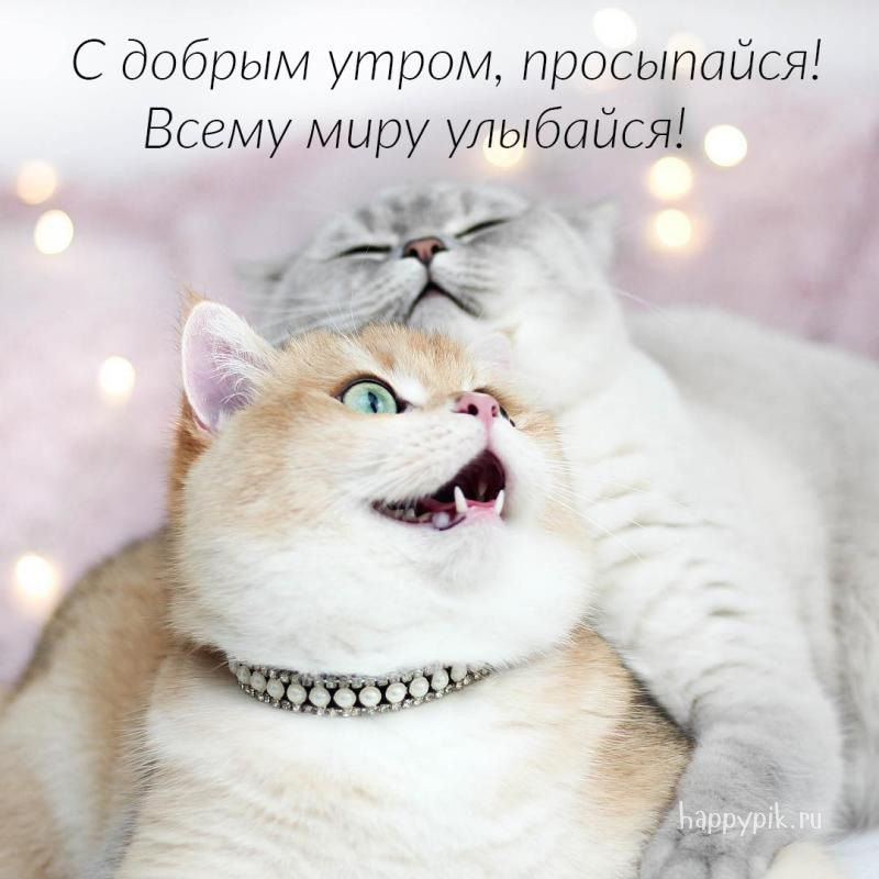 Доброе утро котики картинки (1)