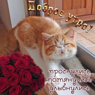 Доброе утро котики картинки (10)