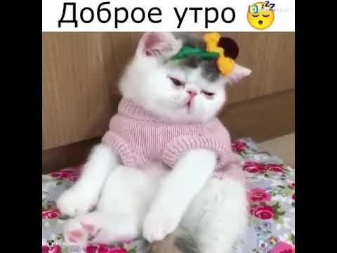 Доброе утро котики картинки (11)