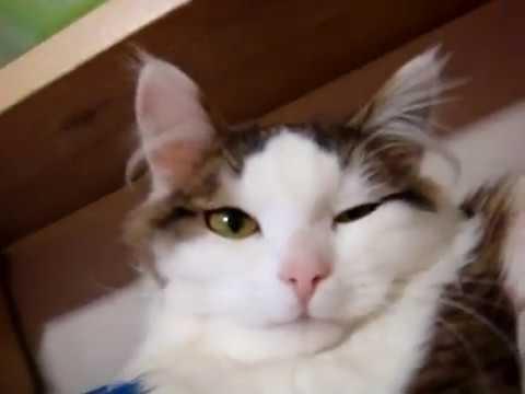 Доброе утро котики картинки (12)