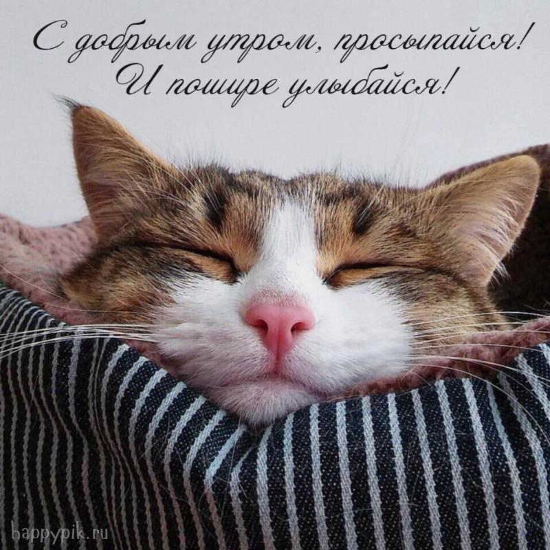 Доброе утро котики картинки (14)