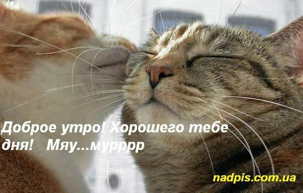 Доброе утро котики картинки (15)