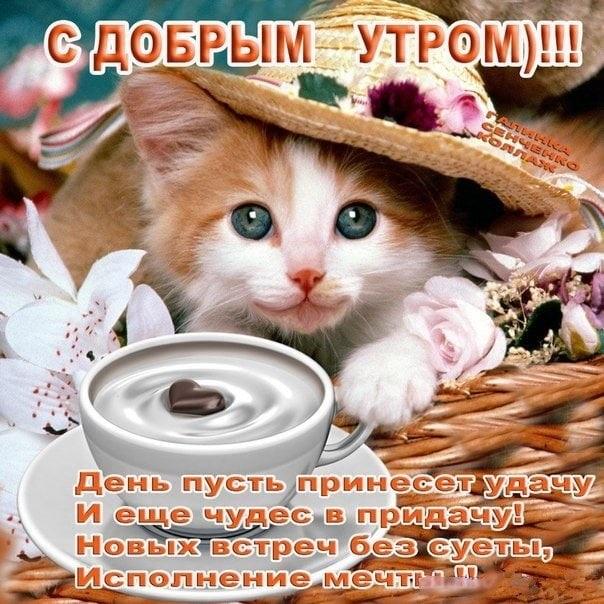 Доброе утро котики картинки (16)