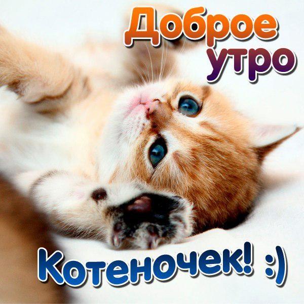 Доброе утро котики картинки (18)