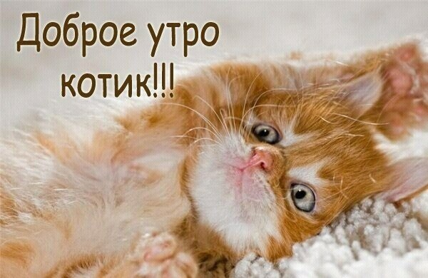 Доброе утро котики картинки (2)