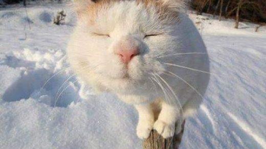 Доброе утро котики картинки (21)