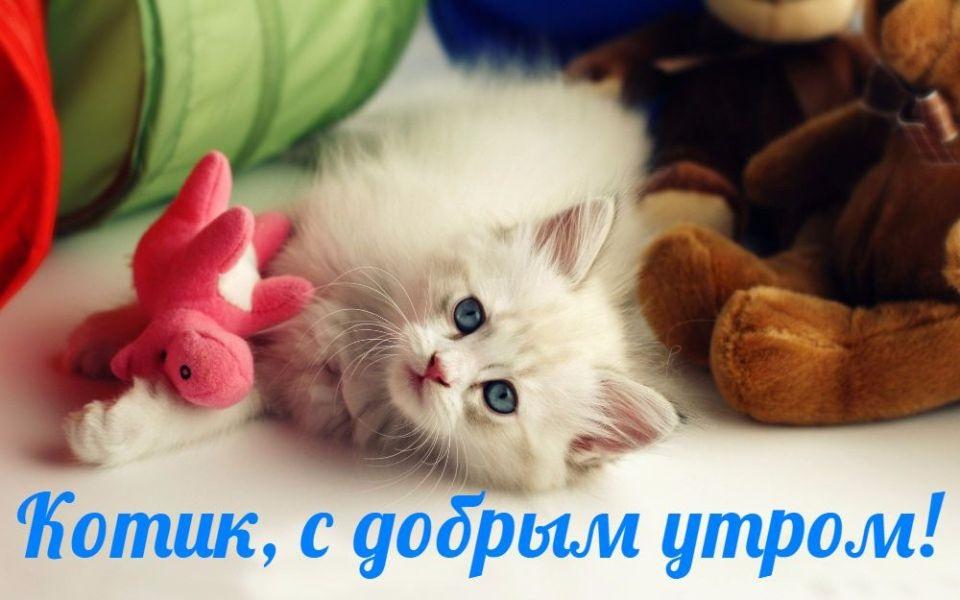 Доброе утро котики картинки (22)