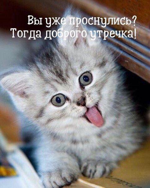 Доброе утро котики картинки (3)