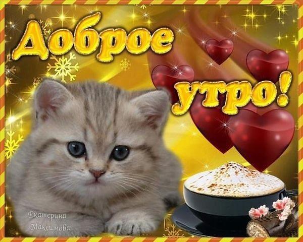Доброе утро котики картинки (4)