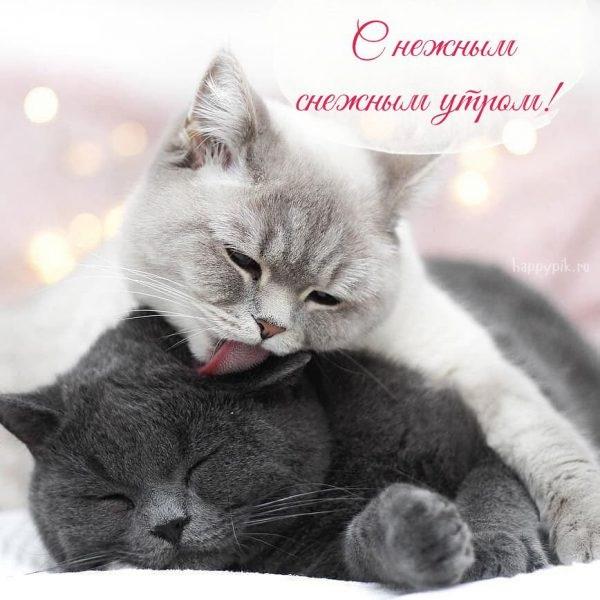 Доброе утро котики картинки (5)