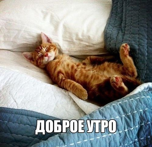 Доброе утро котики картинки (6)