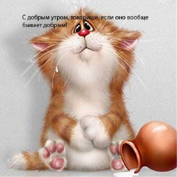 Доброе утро котики картинки (7)
