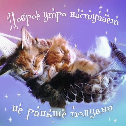 Доброе утро котики картинки (8)