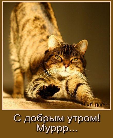 Доброе утро котики картинки (9)
