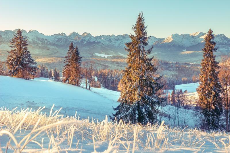 Зимняя природа (1)