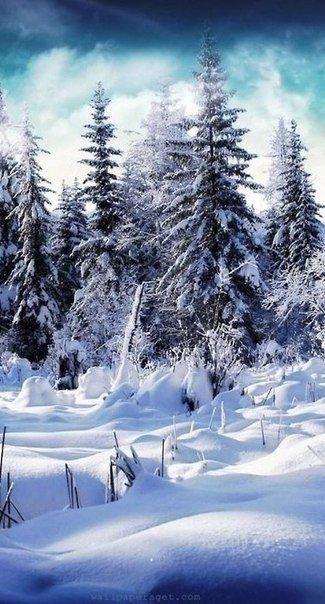 Зимняя природа (12)