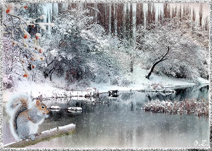 Зимняя природа (14)