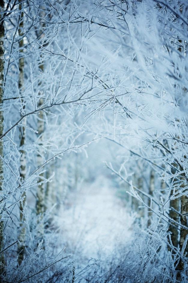 Зимняя природа (16)