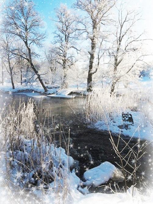 Зимняя природа (18)