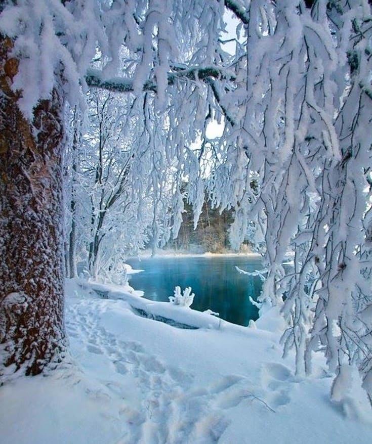 Зимняя природа (19)