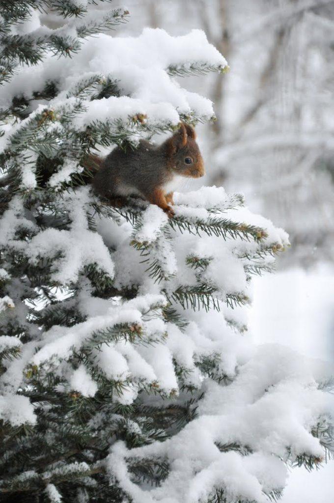 Зимняя природа (20)