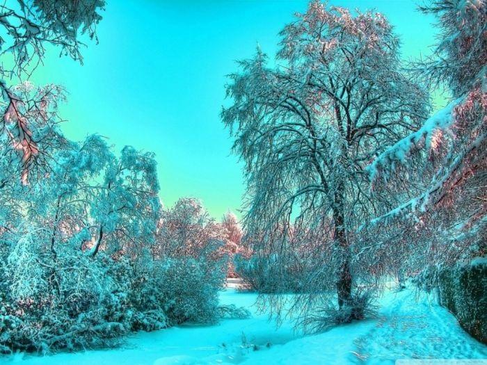 Зимняя природа (21)