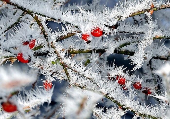 Зимняя природа (22)