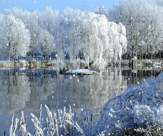 Зимняя природа (3)