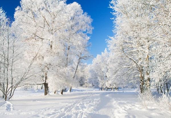 Зимняя природа (6)