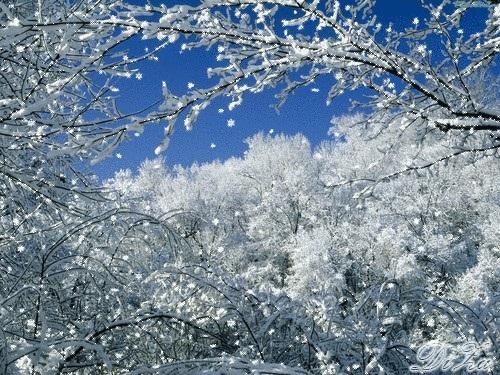 Зимняя природа (7)